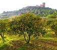 Holiday apartments to rent in Bosa, Sardinia,  - orange grove just outside Bosa